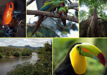Biodiversity Biomes Of The Tropical Rainforest